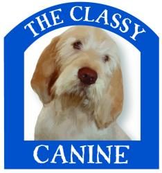 The Classy Canine